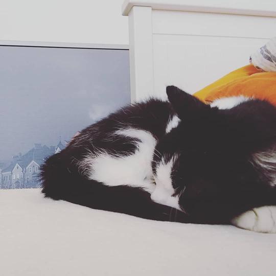 Katze Minnie