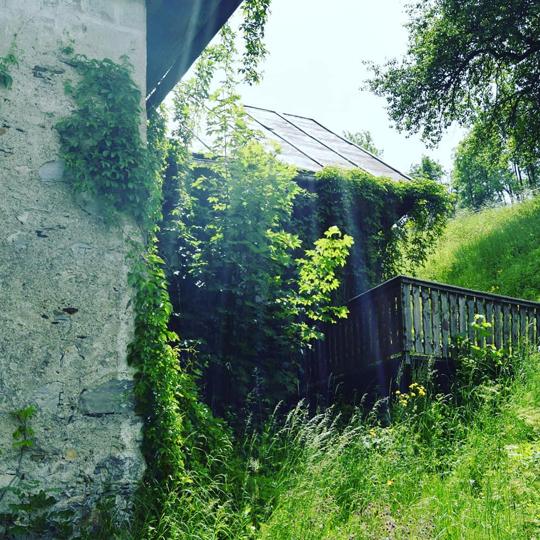 Überwachsenes Steinhaus
