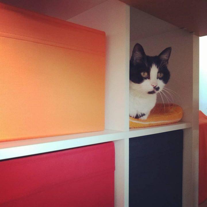 Minnie in einem Regal (Kallax, mit quadratischen Regalfächern)