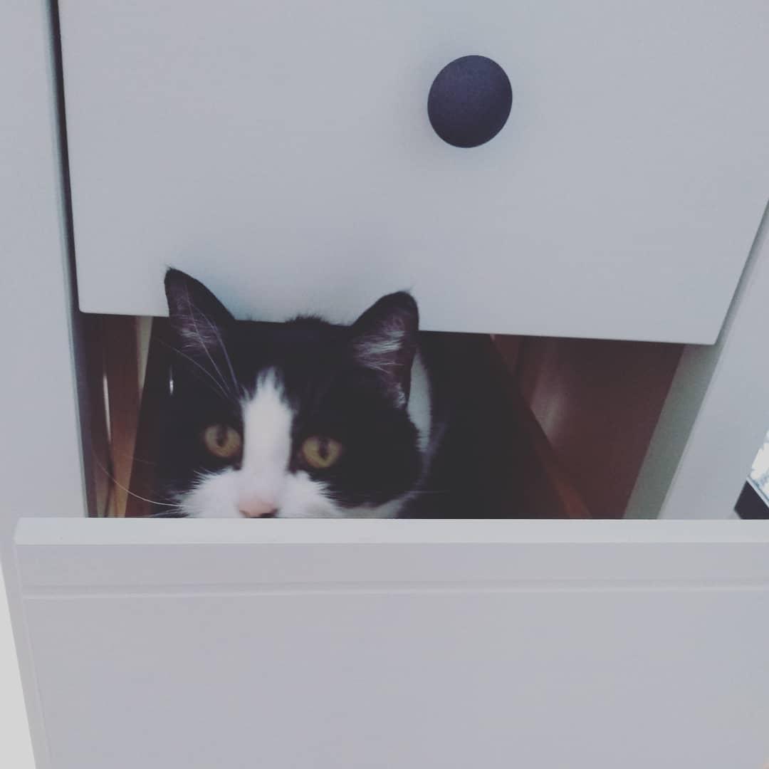 Minnie in Schublade