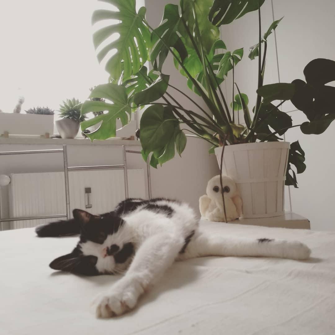 Minnie ausgestreckt am Bett