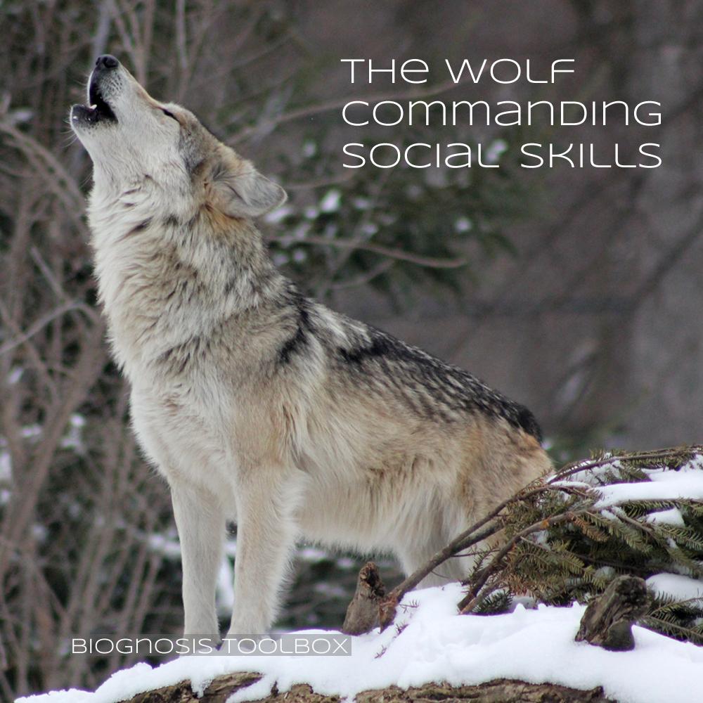 Wolf (heulend)
