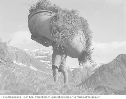 """Mann trägt """"Binkel"""" - ein Tuch voll mit Heu, am Rücken, man sieht nur mehr die Beine"""