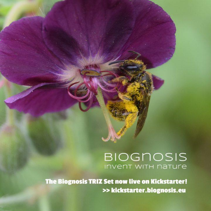 Pollenbeladene Biene in Blume, mit Text-Hinweis auf die Kampagen